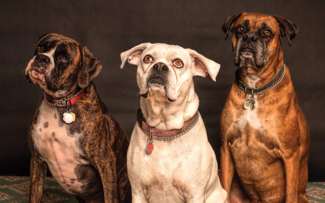 Divorcios y mascotas, ¿Quién se queda la custodia?